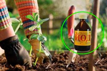 Йод в огороде: подкормка растений, борьба с вредителями и болезнями