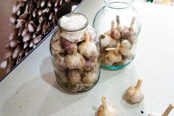 После года хранения чеснок как свежий, лучший способ сохранить урожай