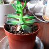9 действенных лайфхаков, с которыми растения будут расти как грибы