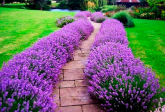 Идеи оформления садовых дорожек