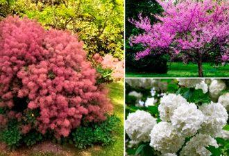 15 цветущих деревьев и кустарников, которые поразят своей красотой