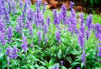 7 растений, которые помогут отпугнуть слизней и улиток с грядок