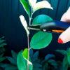 Любое дерево можно заставить плодоносить, главное — знать простую и рабочую технику