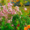 20 многолетних цветов для яркой осени
