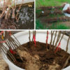 Как сохранить саженцы и луковицы до весны