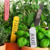 Травы, которые можно выращивать на кухне, и советы по их высадке