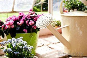 Подкормка комнатных растений дрожжами