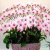 Вкуснятина для шикарного цветения орхидей