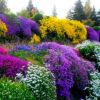 Низкорослые цветы для сада, цветущие все лето