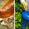 Слизни поспешно покинут огород: сохраните свои растения