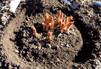 Подготовьте ваши пионы к пышному цветению с помощью полезного совета