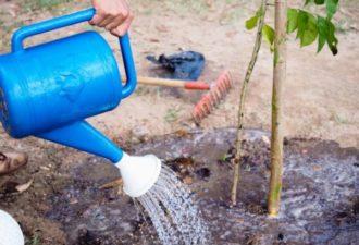 10 важных правил посадки деревьев от опытного садовника
