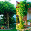 Живая беседка — яркий островок на вашем садовом участке