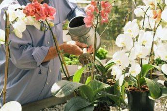 Как правильно поливать орхидею в домашних условиях: какой водой и сколько раз в месяц