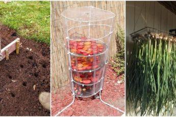 Неожиданные и полезные идеи для сада и огорода, облегчающих работу