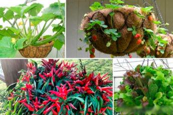 15 идеальных растений для выращивания в подвесных кашпо