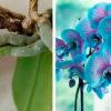 Простые 4 кислоты вернут орхидеям жизнь. Растение наращивает корни и цветёт как раньше