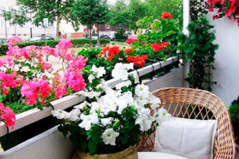 Хотите роскошный цветник в квартире? Тогда запоминайте секретики