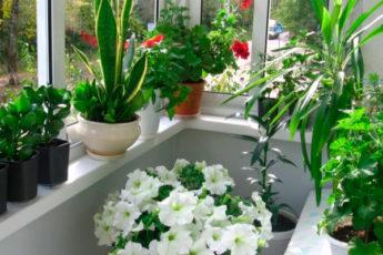 А вы хотите роскошный цветник в квартире? Вот вам 10 секретов